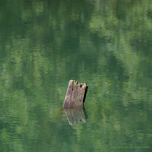 Photo: A chunk of wood submerged in green pond waters. Photo by James Guilford.