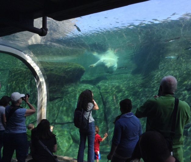 Photo: Columbus Zoo visitors watch Polar Bear swimming from below. Photo by James Guilford.