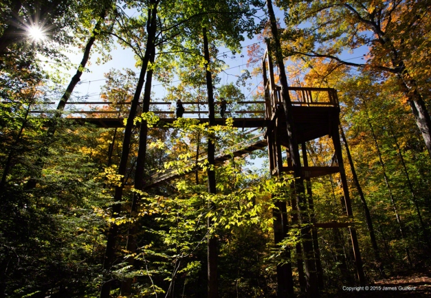 Photo: Corner Support: Murch Canopy Walk. Photo by James Guilford.