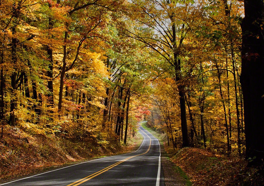 Photo: road winds downhill through woods full of autumn color. Photo by James Guilford.