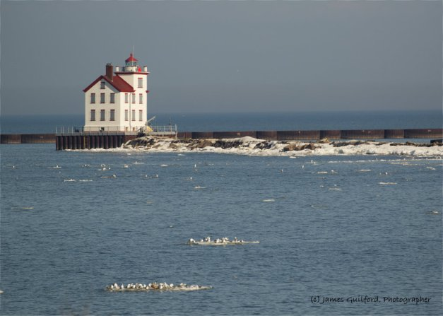 Photo: Gulls sat on nearly every ice floe in Lake Erie, off Lorain, Ohio, as the old lighthouse stood watch. Photo by James Guilford.