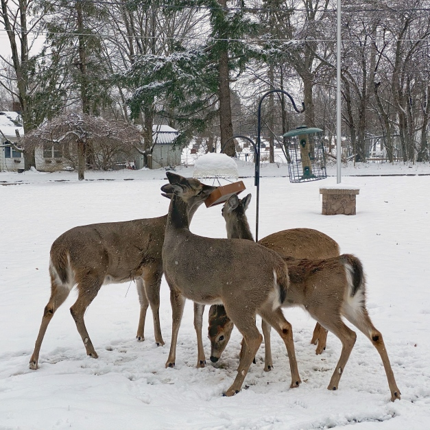 Deer raid a bird feeder. Photo by James Guilford.
