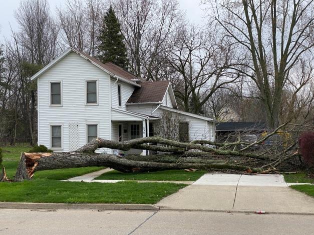 Photo: Downed tree across driveway.